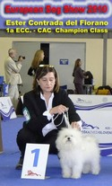 EUROPEAN DOG SHOW 2010  :  1a ECC - CAC  Champion Class