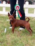 greenvalley pinscher